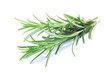 canvas print picture - fresh rosemary isolated on white