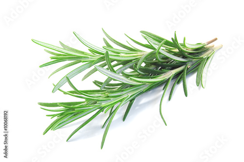 canvas print picture fresh rosemary isolated on white