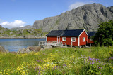 Lofoten Islands - Red house along the fjord poster