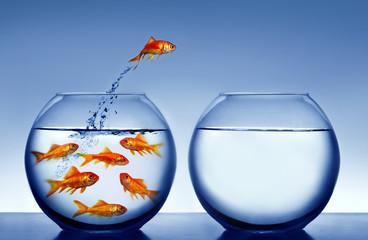 goldfish wyskakuje z wody