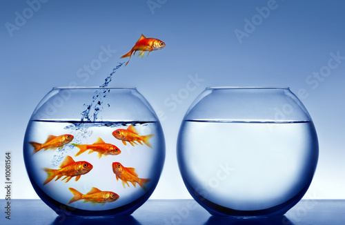 goldfish jumping out of the water - 10081564