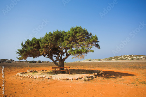 Alone tree in stone desert Cavo Greco