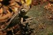 Chamäleon Madagaskar 21
