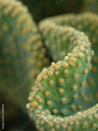 close up on cactus