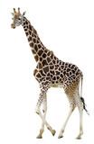 Détourage d'une girafe