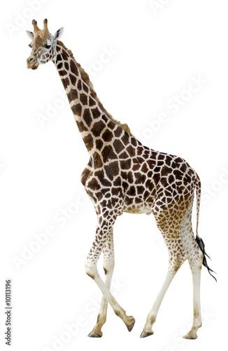Fotobehang Giraffe Détourage d'une girafe