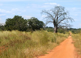 dirt road in the middle of Africa poster