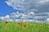wild summer meadow against dark cumulus clouds. poster