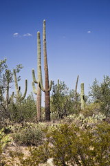 Saguaro Nationalpark Arizona