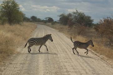 A zebra crossing the dirt road, Tanzania