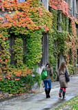 Fall Ivy at University Campus
