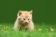 roleta: Katzenkind