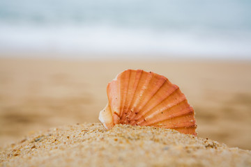 Beautiful orange cockleshell on sand ..