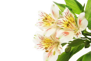 Day lily flwers