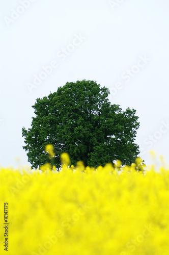 Leinwandbild Motiv Baum im Hintergrund
