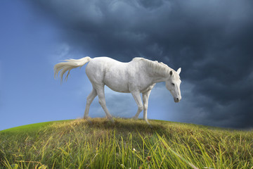 White horse walking in prairie.