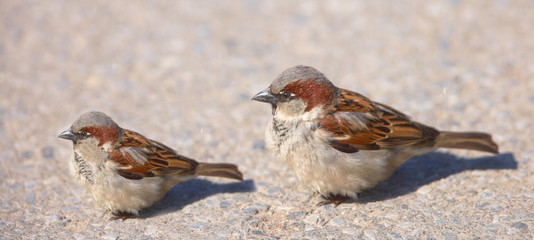 A telephoto of small sparrows in early sunset