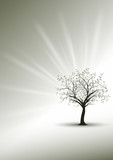 Fototapety nature modern background concept - tree symbol of life