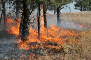 Forest Fire Flames 3