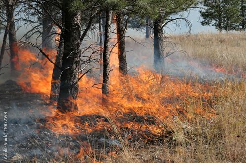 Leinwandbild Motiv Forest Fire Flames 3