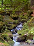 Fototapety Wildbach im Teutoburger Wald