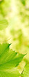 green foliage background with vivid colors - vertical banner