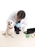 A veterinarian begins a checkup on a dog poster