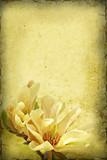 Magnolia Grunge Background.-
