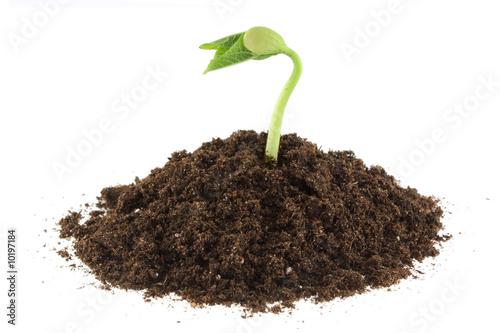 plante qui pousse photo libre de droits sur la banque d 39 images image 10197184. Black Bedroom Furniture Sets. Home Design Ideas