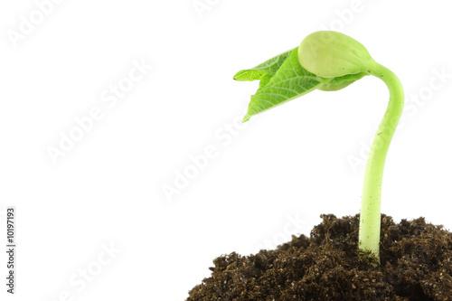 plante qui pousse photo libre de droits sur la banque d 39 images image 10197193. Black Bedroom Furniture Sets. Home Design Ideas