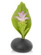 Fleur gingembre esprit zen