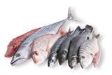 Fototapety pesce in pescheria