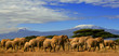 Kilimanjaro And Elephants