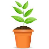 Grüne Pflanze poster