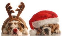 "Постер, картина, фотообои ""english bulldogs dressed up as santa and rudolph"""