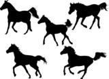 arabian stallions poster