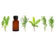 Herb Leaf Sprigs