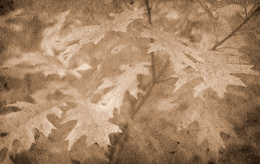 Old paper autumn background