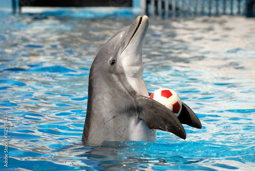 Deurstickers Dolfijn Dolphin playing with a ball