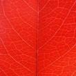 Vine-leaf texture