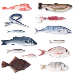 pesce gastronomico