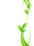 Fototapeta streszczenie - koncepcja - Roślinne