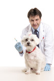 Veterinarian stands behind a pet dog.  Focus to dog. poster