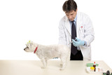A vet gives a pet dog an injection.  Focus to hand and dog. poster
