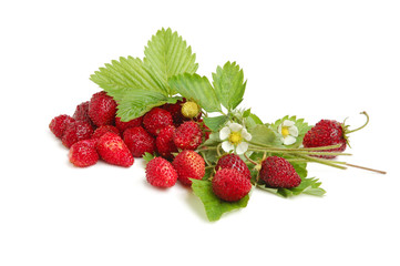 Wild strawberries plant with green leaves, flower