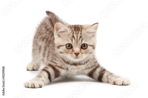 Funny kitten - 10299968