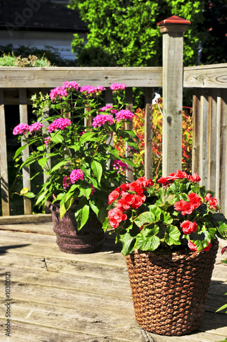 Wooden house deck decorated with flower pots