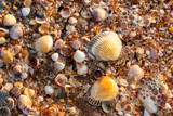 nature series: sea shell background with water and foam