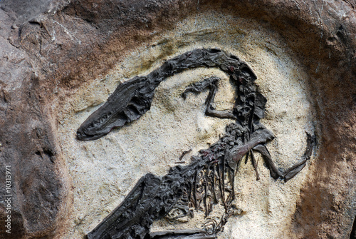 Poster Fossil