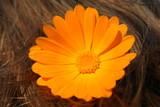 Orange flower in hear poster